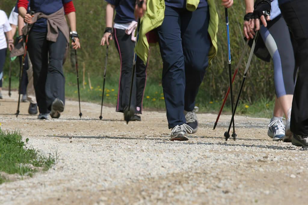 Mehrere Personen beim Nordic Walking im Wald.