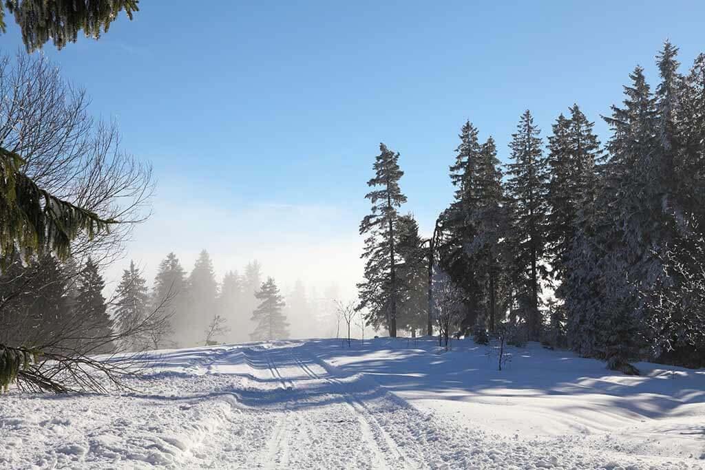 Ein verschneiter Weg im Wald bei Sonnenschein.