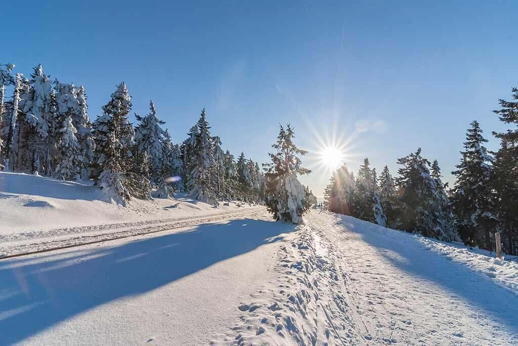 Ein schneebedeckter Wald an einem sonnigen Tag.