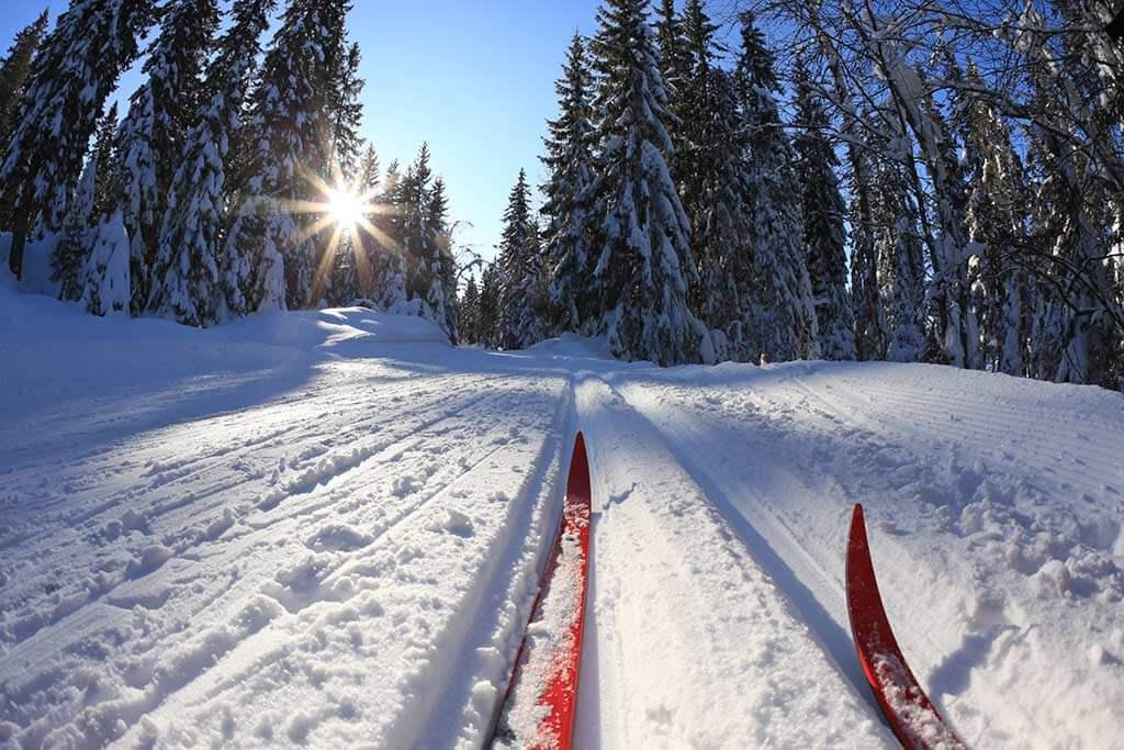Ein Paar Ski beim Langlauf im Wald.