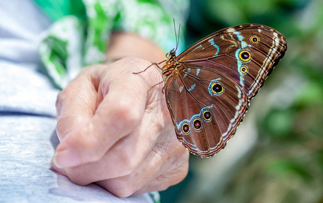 Eine Hand mit einem Schmetterling darauf.